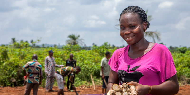 A woman holding a hand full of cassava in a field with men harvesting behind her