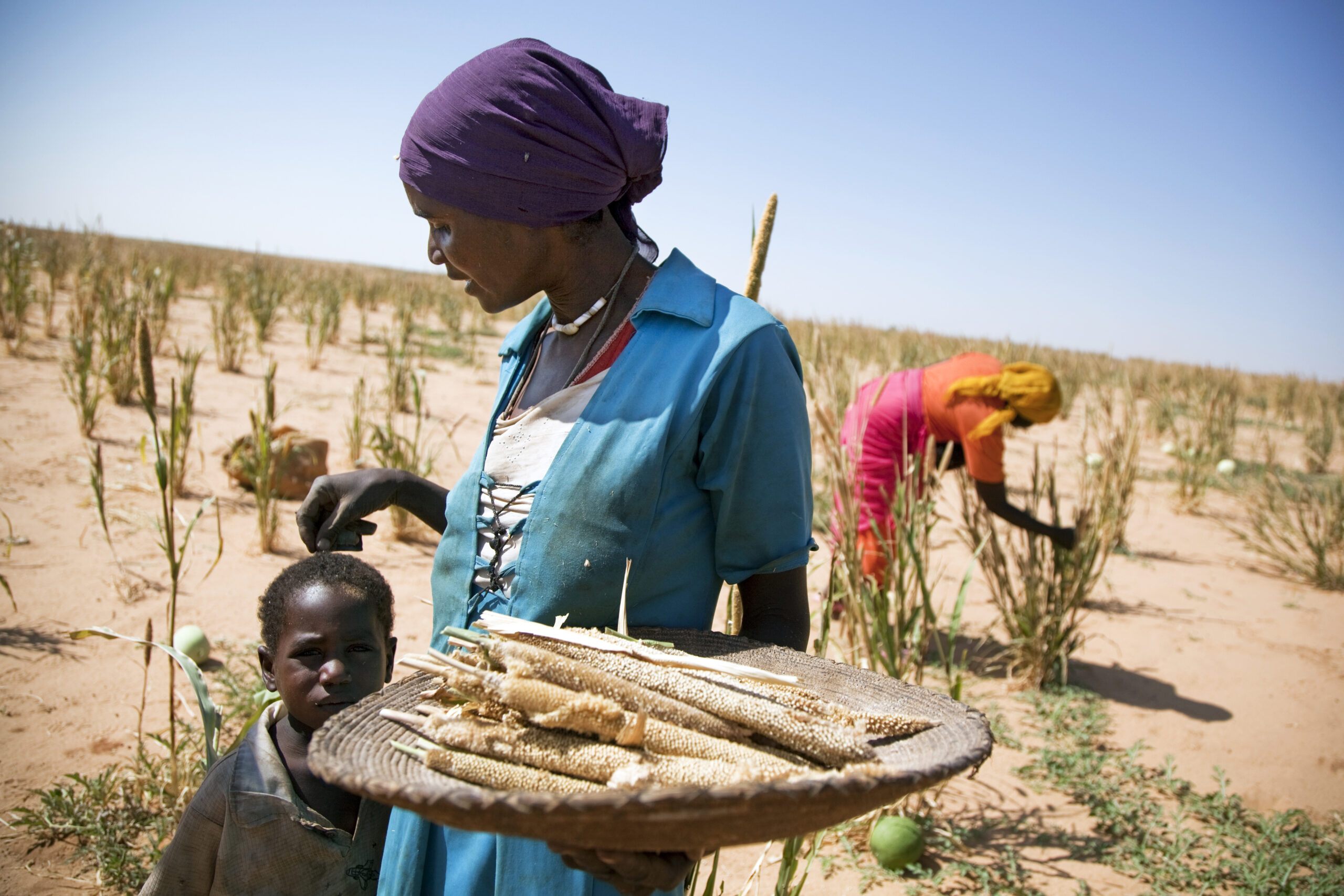 Empowering people and shaping policies for resilient agriculture and food systems (WP1237)