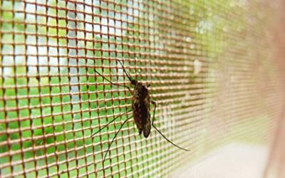 Sustaining progress in the fight to end malaria