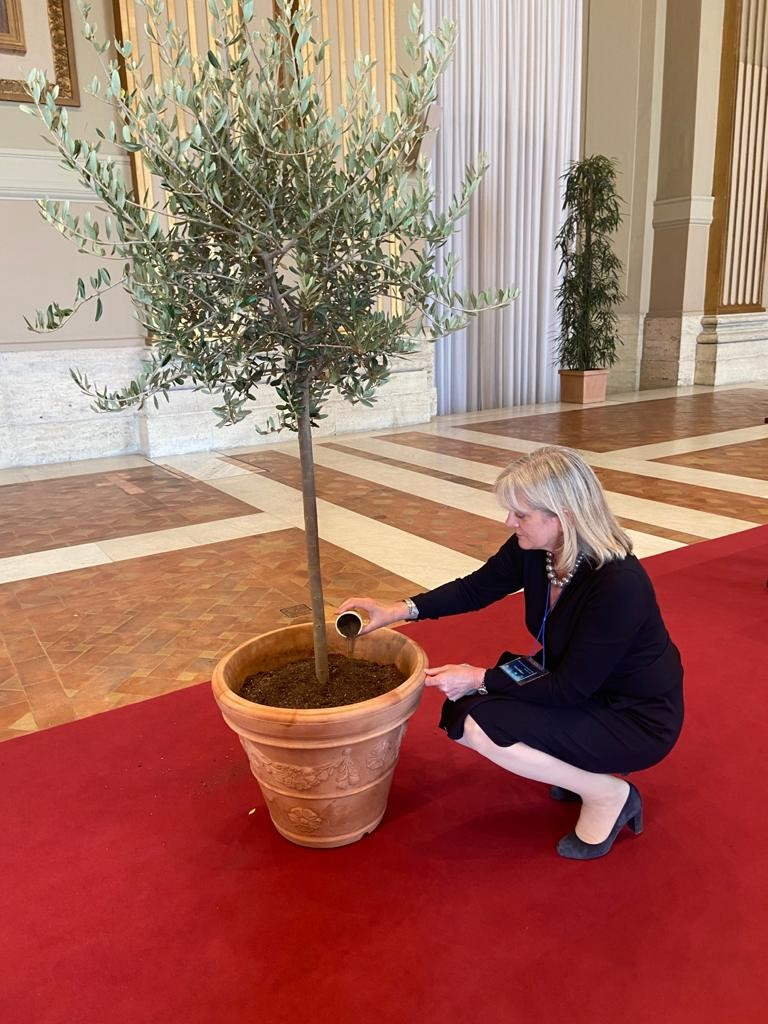 Alison planting an olive tree